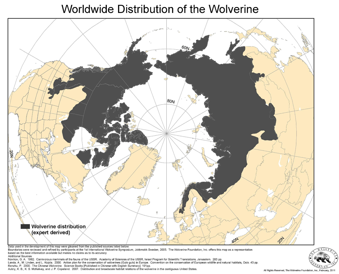 The Wolverine Foundation | Wolverine Distribution on canada lynx diet, canada goose range map, canada lynx habitat, canada lynx classification, canada lynx home, canada lynx face, canada lynx life cycle, canada lynx den, lynx habitat map, canada lynx diagram, canada lynx predators, canada lynx behavior, canada lynx sightings in 2014, eurasian lynx range map, lynx territory map, canadian lynx map, canada lynx endangered, canada lynx size, canada lynx cat, canada lynx population numbers,